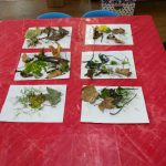 Autumn pictures at barn owls preschool